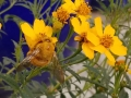 late-bee