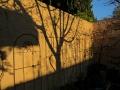 spring-shadows