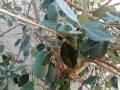 IMG_20141008_170202_feijoa_tree
