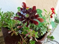 Pot full of succulents