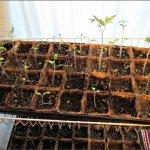 seedling_coir