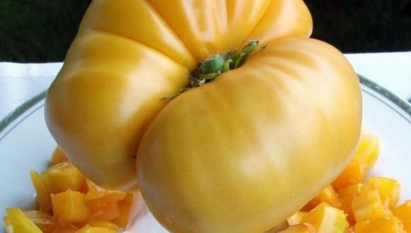 Tomato – Yellow Beefsteak
