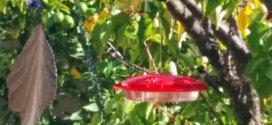 disk-shaped hummingbird feeder