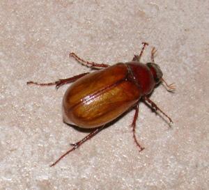 june-bug-770c1