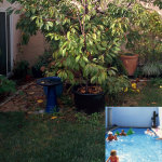 backyard before and after a pool conversion
