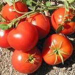tomato_sf_fog