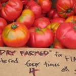 dry-farmed-tomatoes-at-farmers-market