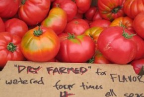 Dry Farming of Tomatoes
