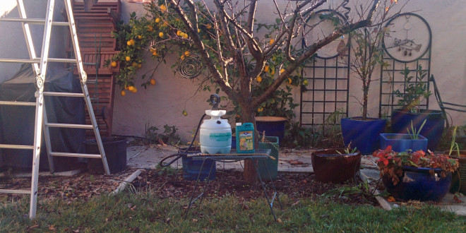 Dormant Spraying of Apricots