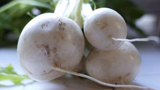 Turnip – Mikado