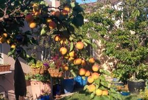 It's Apricot Time!