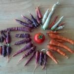 carrot_harvest_2015