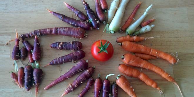 Carrots July 2015