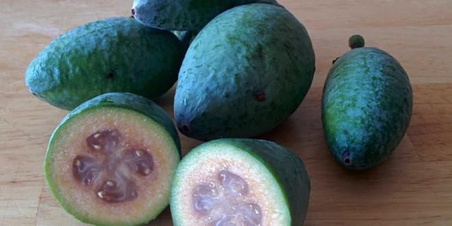 Pineapple Guava 2015