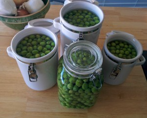 green-olives-curing-in-brin