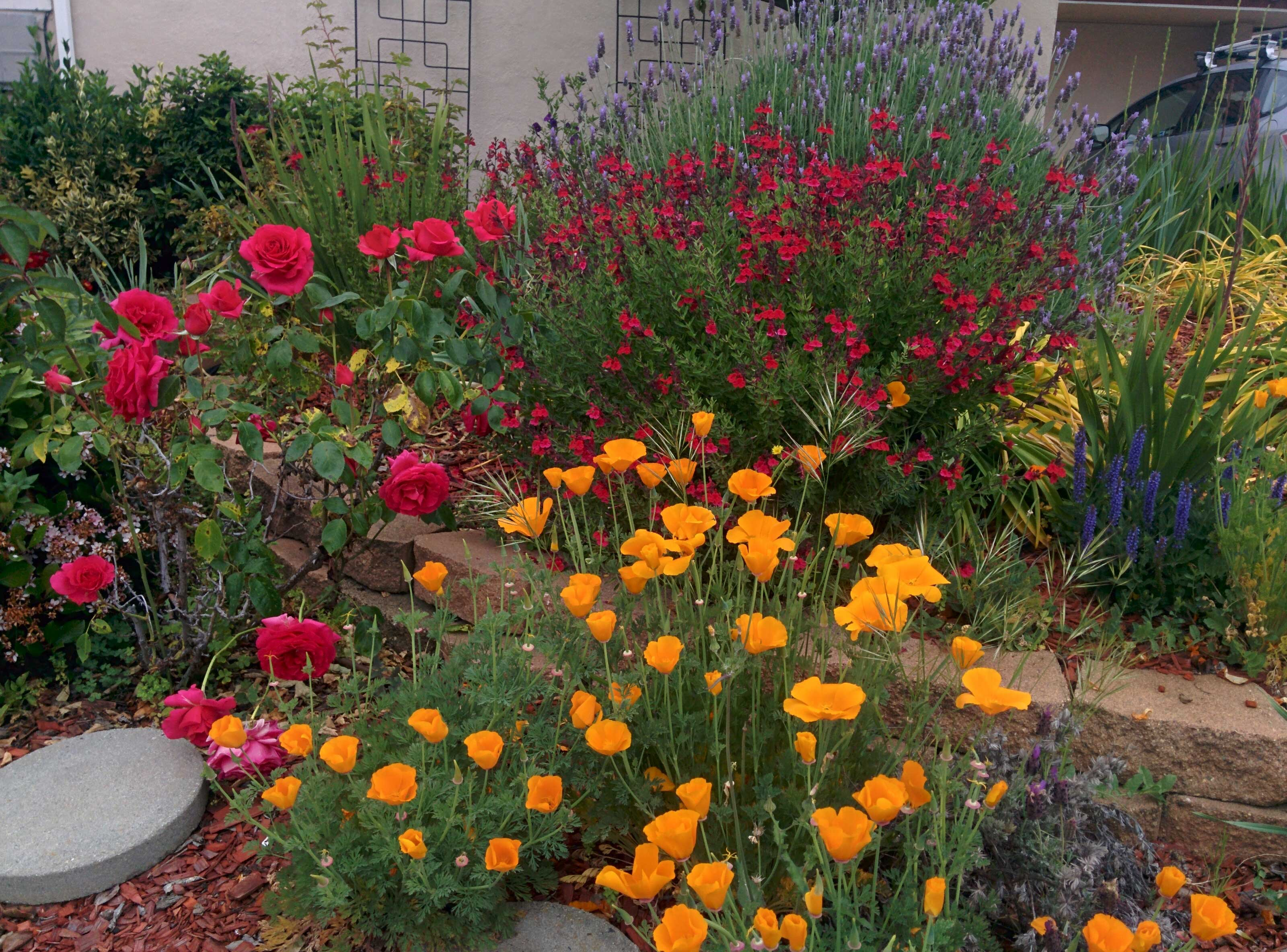 This Sunnyvale Garden – May 2016 | Sunnyvale Garden