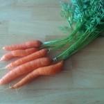carrots2016