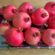 Pomegranate Harvest 2016