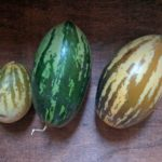 pepino-melons-last