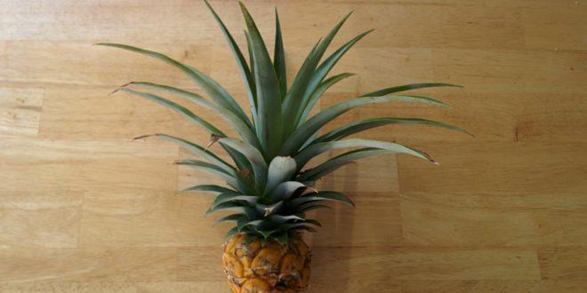 Pineapple 2016
