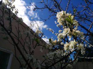 plum-day