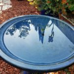 bird-bath-reflection