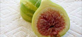 Panache Fig