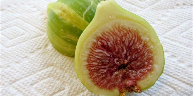 panache fig sliced
