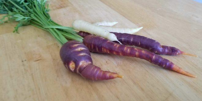 Carrots 2018